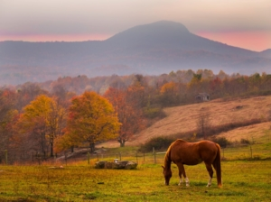 Image of horse in a pasture with a mountain in the background